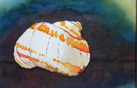 Beach Snail, watercolor, ©Anna Dal Pino