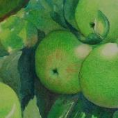 Green Apples, watercolor and colored pencil