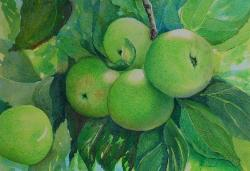 Green Apples, colored pencil & watercolor, ©Anna Dal Pino