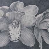 Orchid Study, pencil on paper