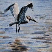 A Pelican Takes Off over Shallow Water, watercolor