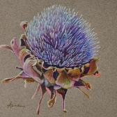 Artichoke Flower, colored pencil on toned paper