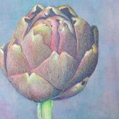 Artichoke No. 3, colored pencil on watercolor toned paper