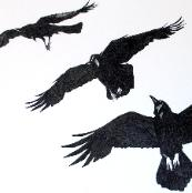 Investigation of a Raven Investigating Me, charcoal